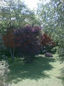 Лиственные декоративные растения в ландшафтном дизайне